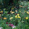 所沢のゆり園見頃開花状況画像や割引クーポンや駐車場アクセス 更新中